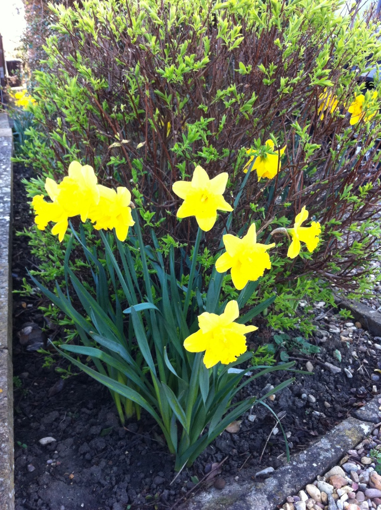These beauties have shot up in our front garden! Makes me happy!